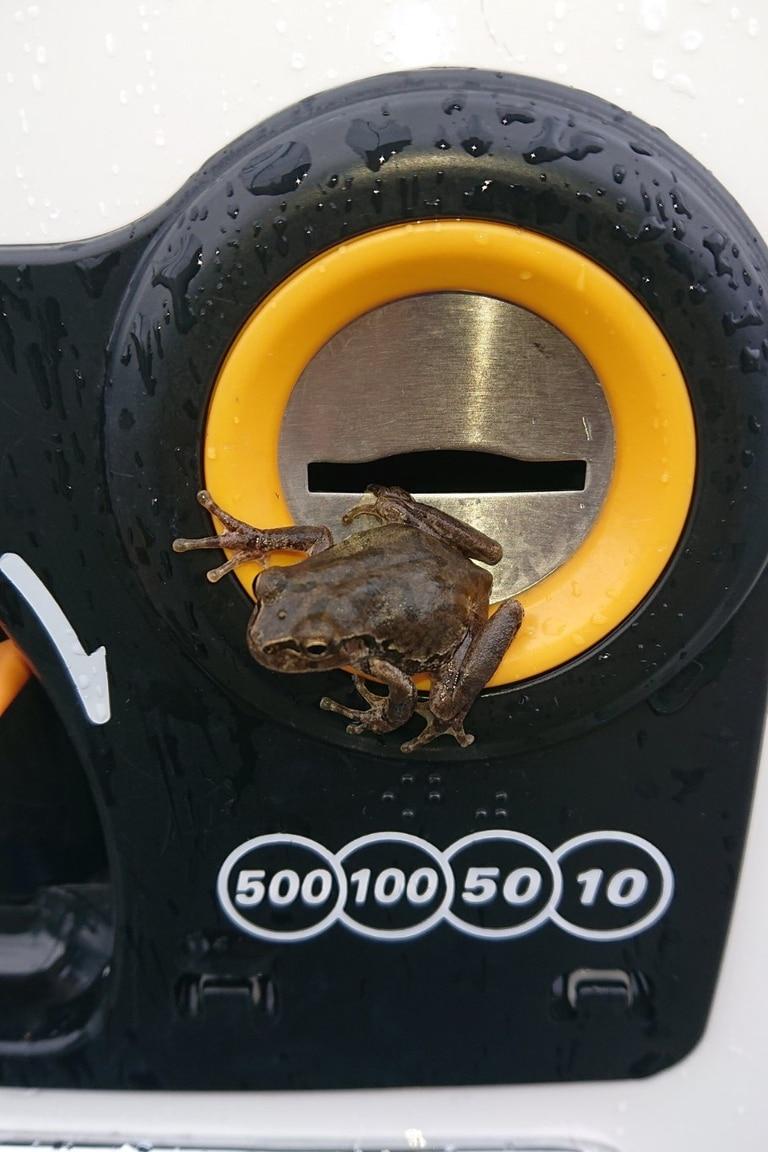 Finalmente, la pequeña rana abandonó la máquina expendedora