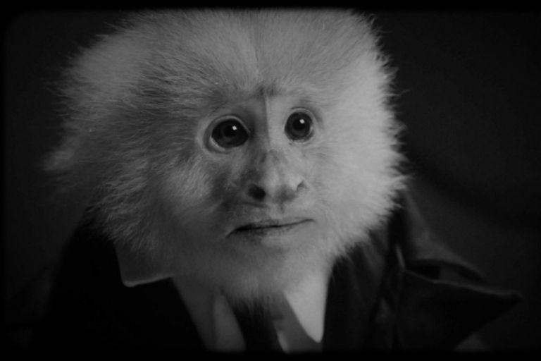 Este mono esconde un puñado de secretos y por eso debe ser interrogado