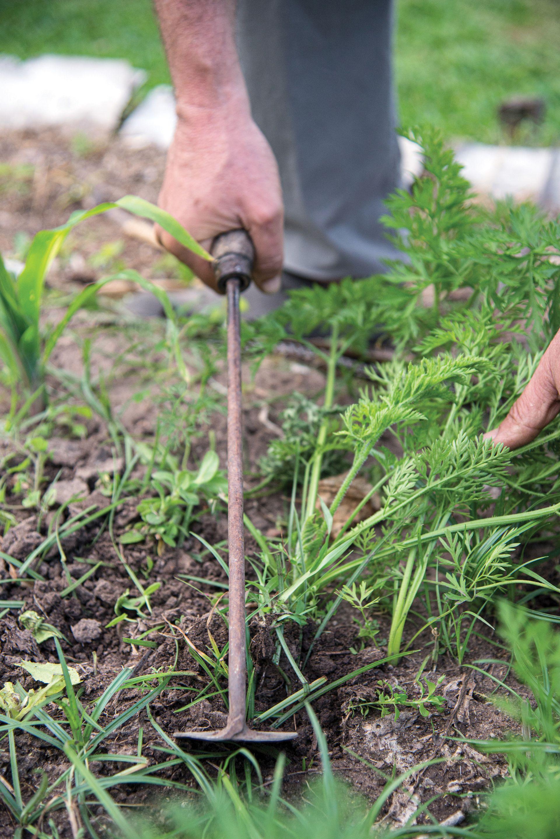 El suelo de la huerta también necesita que, con una azada, se airee de manera superficial.