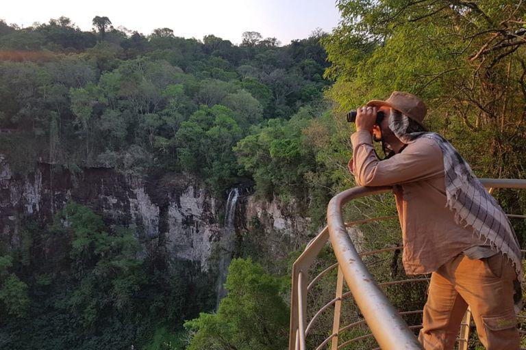 Las águilas que habitan la selva argentina son muy difíciles de registrar