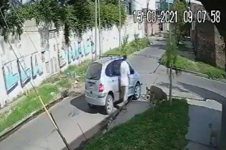 Lanús: se robó una oveja en el baúl del auto pero se arrepintió y la devolvió