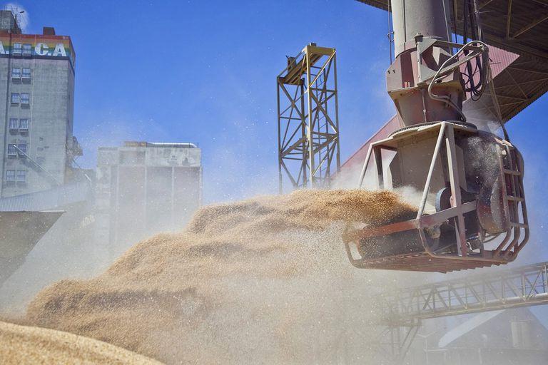 """Para Ciara Cec, si hay nuevos piquetes """"impedirán la circulación de camiones con granos, lo que comprometerá las exportaciones de trigo y cebada"""""""