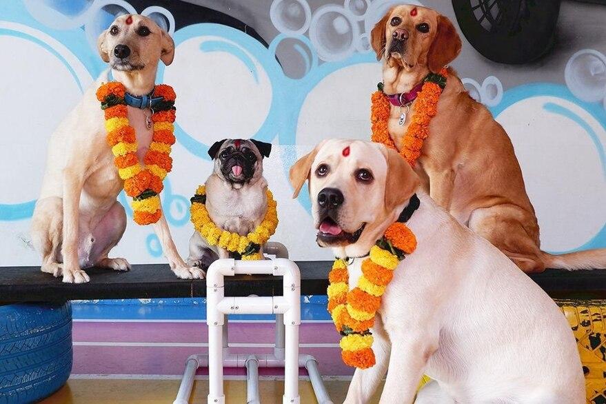 Día Mundial del Perro: los cuatro beneficios de las personas que adoptan una mascota