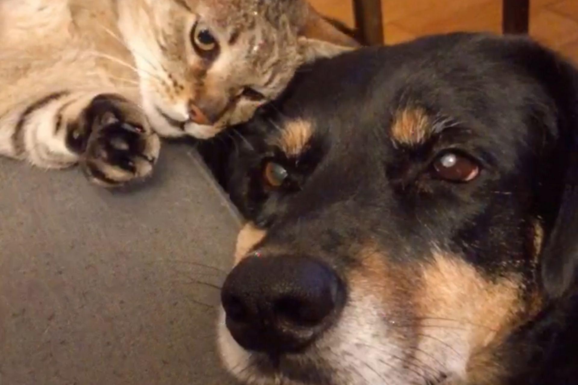 Rocco, el gato de Patricio, también es rescatado y parecía comprender lo que estaba pasando: otro cuatro patas necesitaba de ayuda