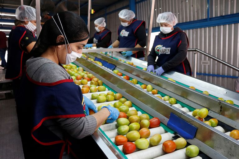 Trabajadores en una planta en Sinaloa, México