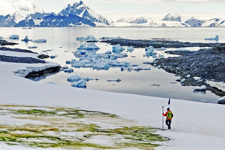 """""""Nieve verde"""". El fenómeno que tiñe a la Antártida por el cambio climático"""