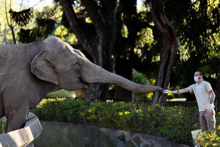 Cuidadores y veterinarios se despiden de la elefanta horas antes de emprender el viaje a Brasil