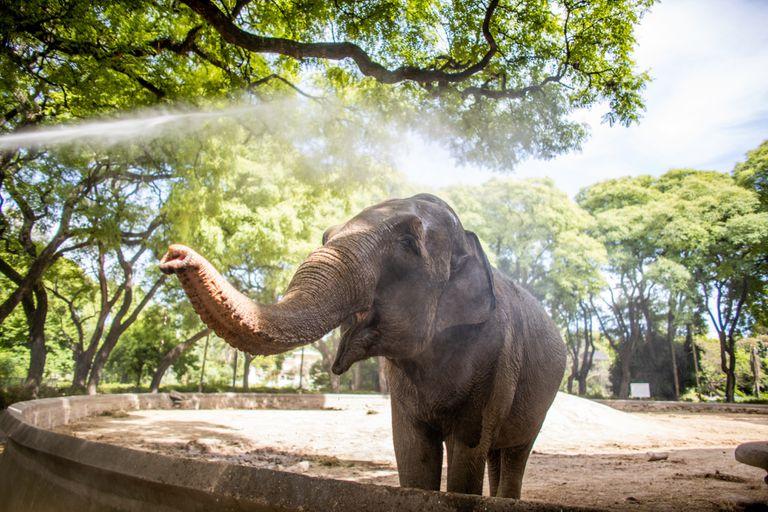 Elefanta Mara: el gobierno porteño anunció que en marzo se irá a Brasil