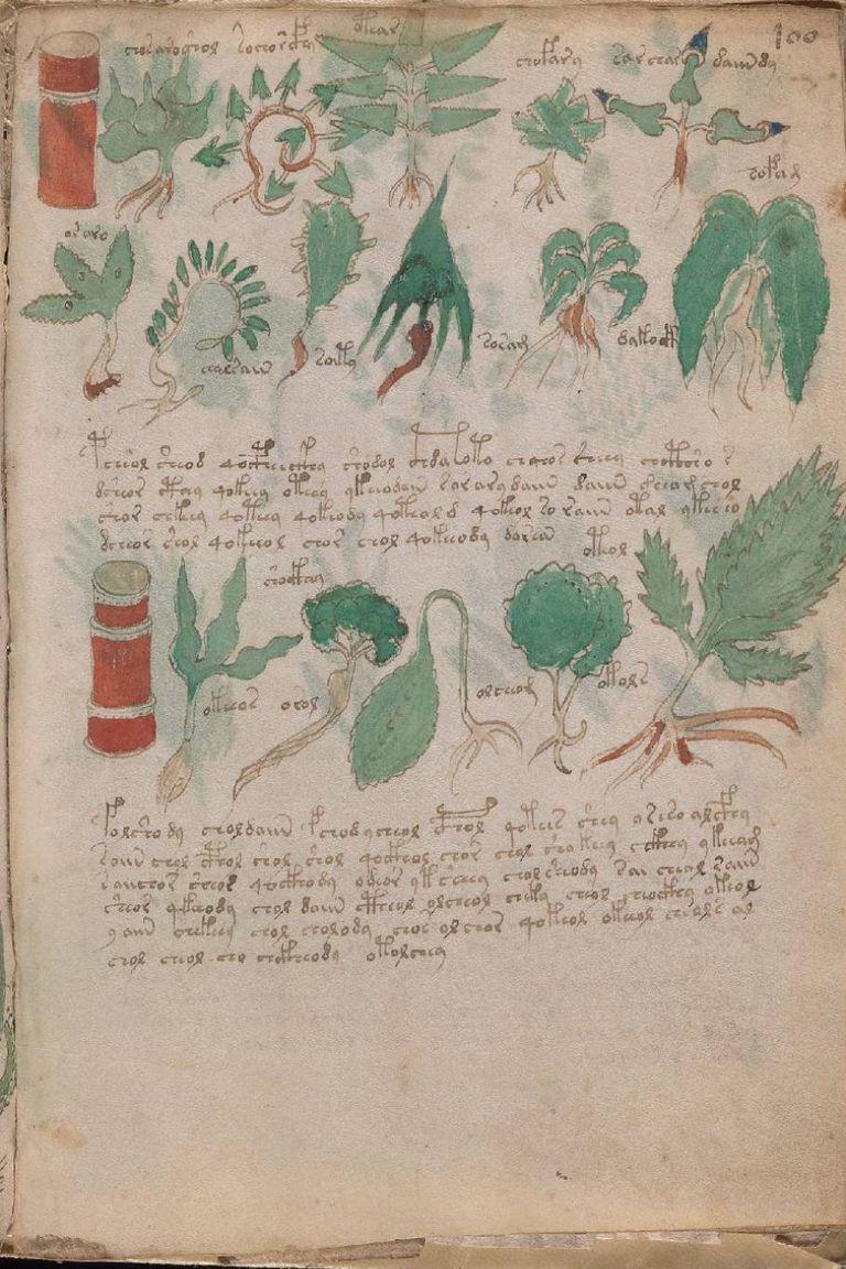 Otra de las partes del libro de Voynich parece dedicada a la herboristería o la farmacopea, aunque hasta que no se dilucide el contenido del texto, todas las afirmaciones son solo teorías