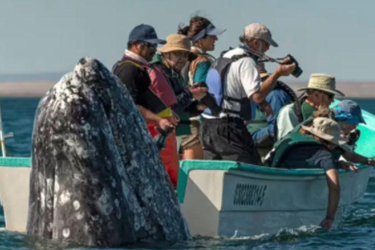 La ballena apareció por el otro costado del bote confundiendo a los turistas. Fuente: Carters