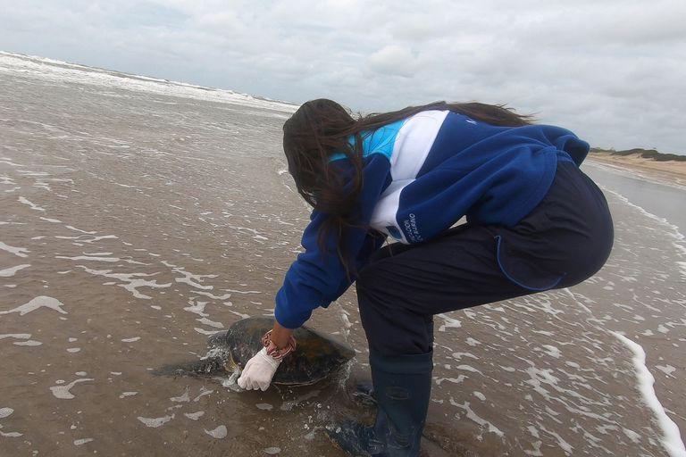 """""""Siempre una reinserción es algo muy emotivo"""", dice Karina Álvarez, bióloga del área de Conservación de Mundo Marino"""
