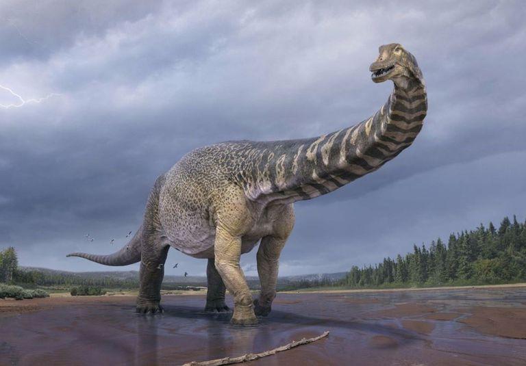 Detallaron que el espécimen alcanzó una altura de 5 a 6,5 metros en la cadera y de 25 a 30 metros de largo y se encuentra entre los 10 a 15 dinosaurios más grandes del mundo