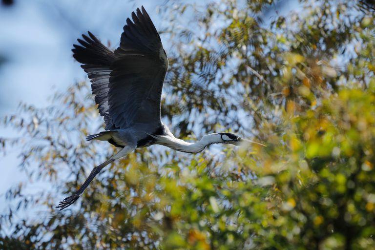 Sin gente, los pájaros invaden la ribera de la zona norte