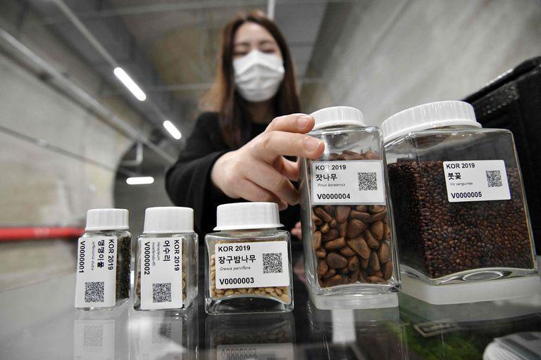 Las semillas solo pueden ser retiradas de la cámara donde se encuentran en caso de extrema necesidad, luego de una catástrofe humanitaria global