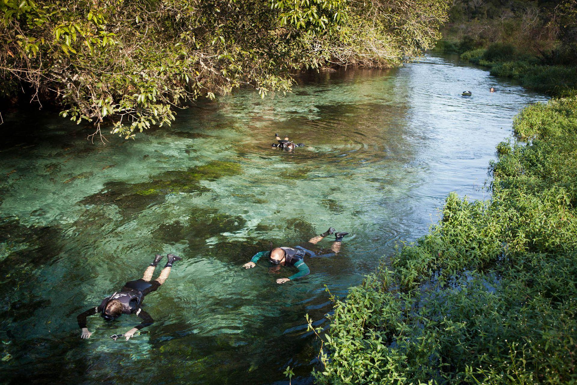 Flotación del río Sucuri: angosto y muy transparente, es ideal para quienes debutan con esta actividad