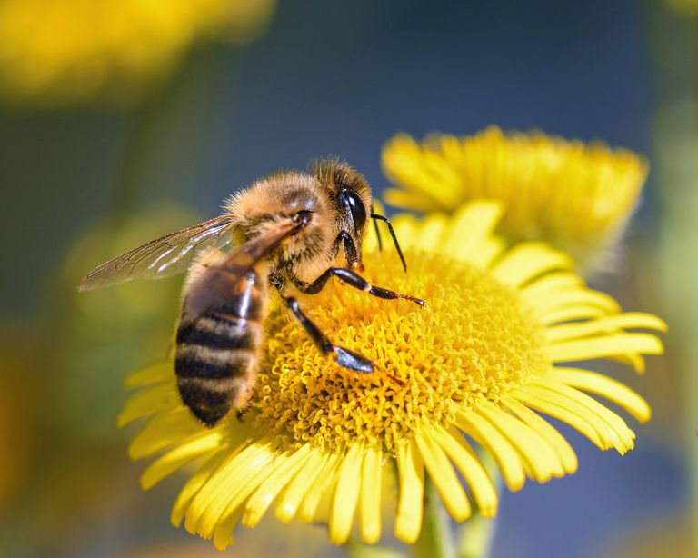 Día Mundial de la Abeja. 10 lecciones para aprender de estos insectos