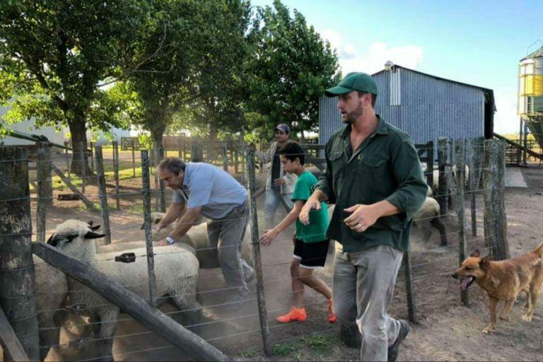 La cabaña ovina Unelen produce 400 animales por año