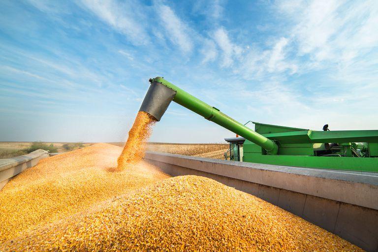 El Gobierno y el sector privado buscan coincidir por el consumo local de maíz