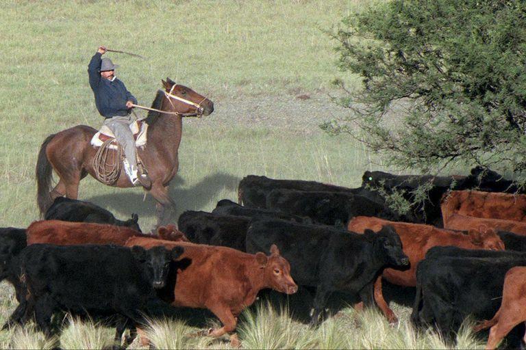 La prórroga incluye a la producción de alimentos para animales