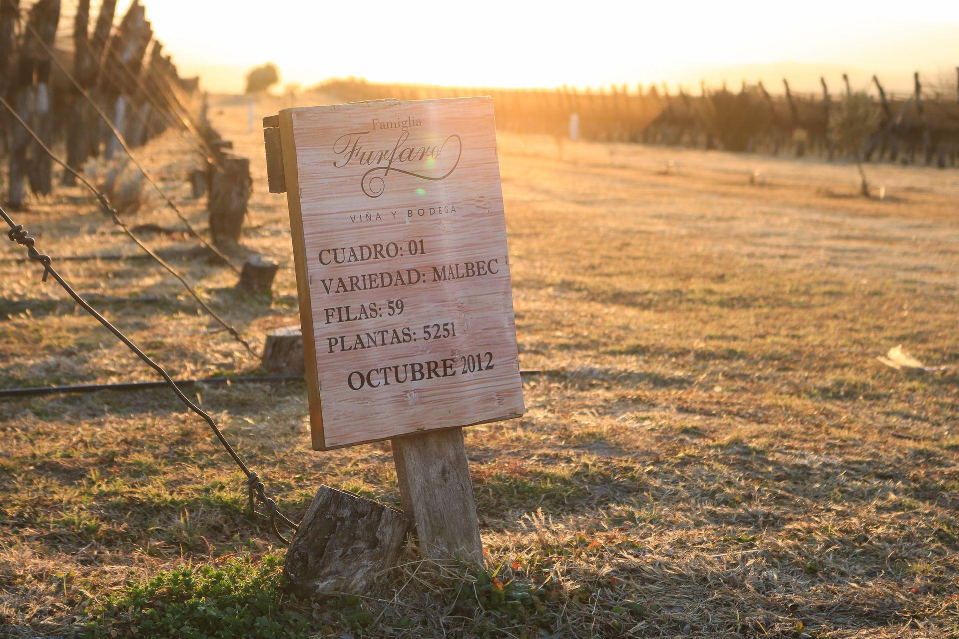 Famiglia Furfaro está en Villa Ciudad Parque y es un viñedo de 6 hectáreas