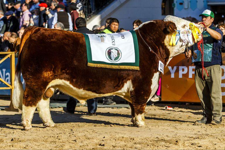 Exposición Rural. Un toro del empresario Sigman, Gran Bicampeón Polled Hereford