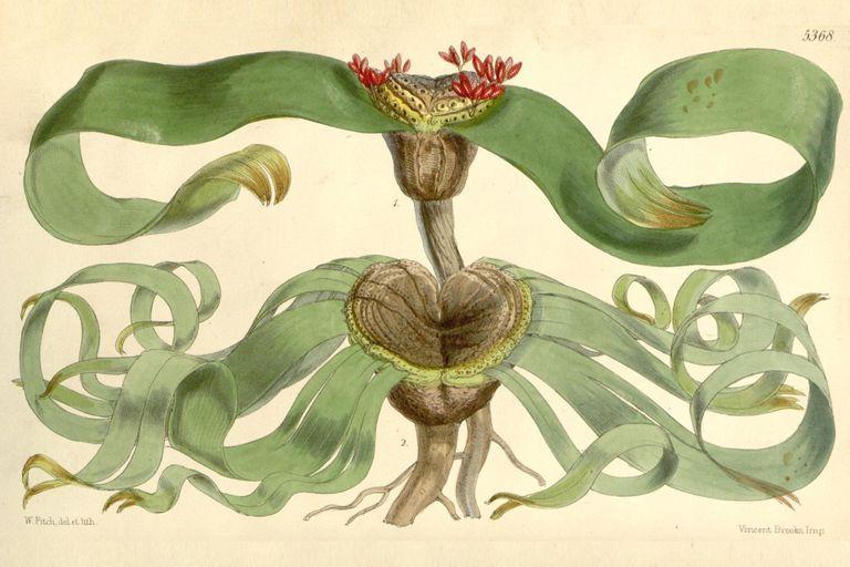 """Científicos revelan los secretos genéticos de la planta que """"no puede morir"""""""