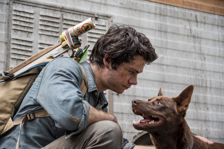 El joven Joel Dawson (Dylan O'Brien) se encuentra con Boy, un perro que se convertirá en su fiel compañero de aventuras en la película Amor y monstruos