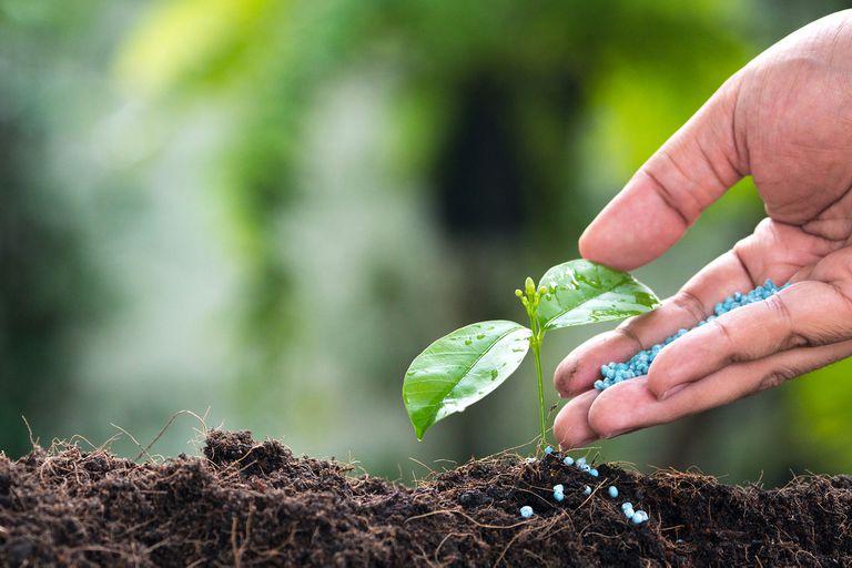 Fertilizantes: por qué son imprescindibles para producir más