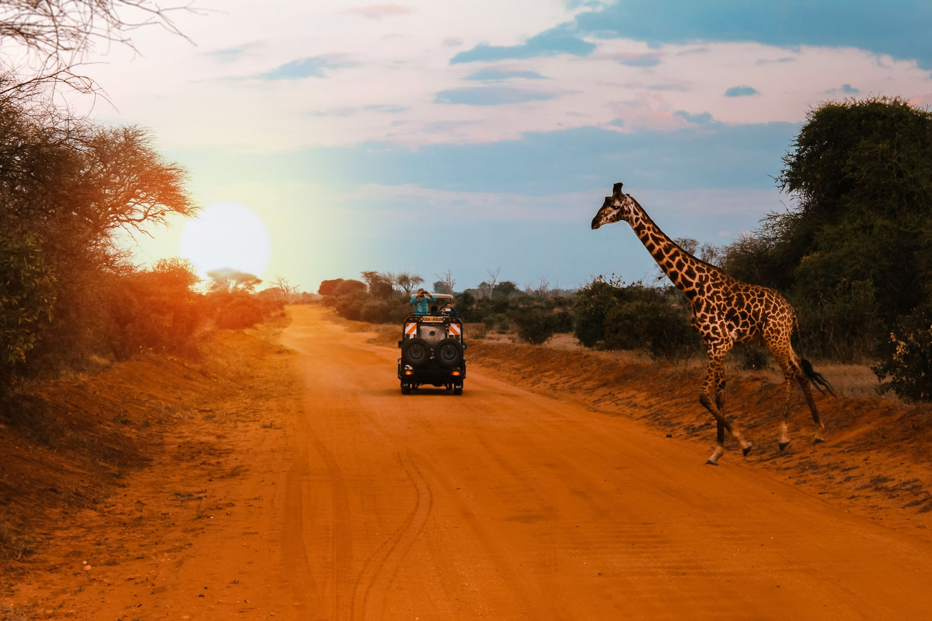 Un jeep para mientras una jirafa cruza la carretera durante un Safari en Kenia