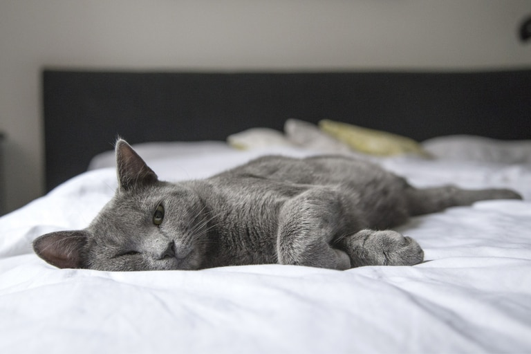 Los gatos detestan ciertas cosas que hacen los humanos, de las cuales probablemente también le molesten a cualquier persona