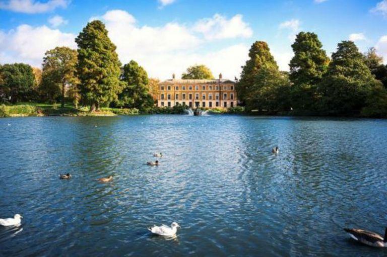 Wickham llevó las semillas a Kew Gardens en Londres.