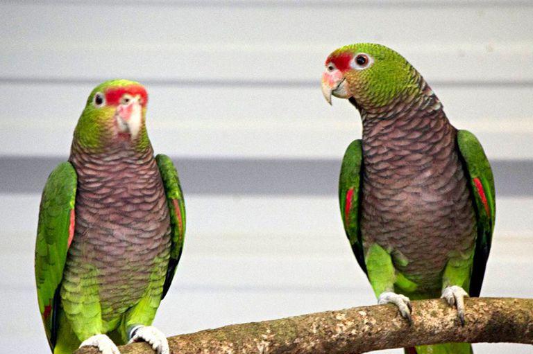 Un relevamiento internacional advirtió que en los últimos cinco años se agravó la situación de 96 especies en 21 países; el estudio abarcó desde La Florida, en Estados Unidos, hasta la Patagonia