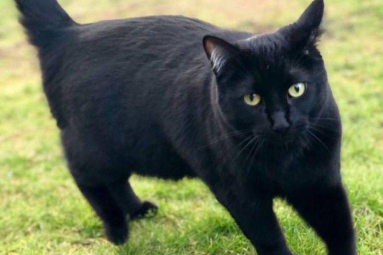 Esme, el felino delincuente, merodea los garajes de los vecinos y suele quedarse con guantes de jardinería o cualquier otro objeto que pueda recoger