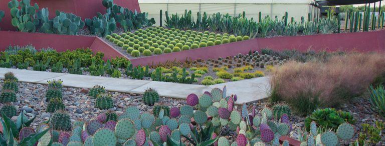 Cactus y suculentas. 100 preguntas y respuestas para fanáticos