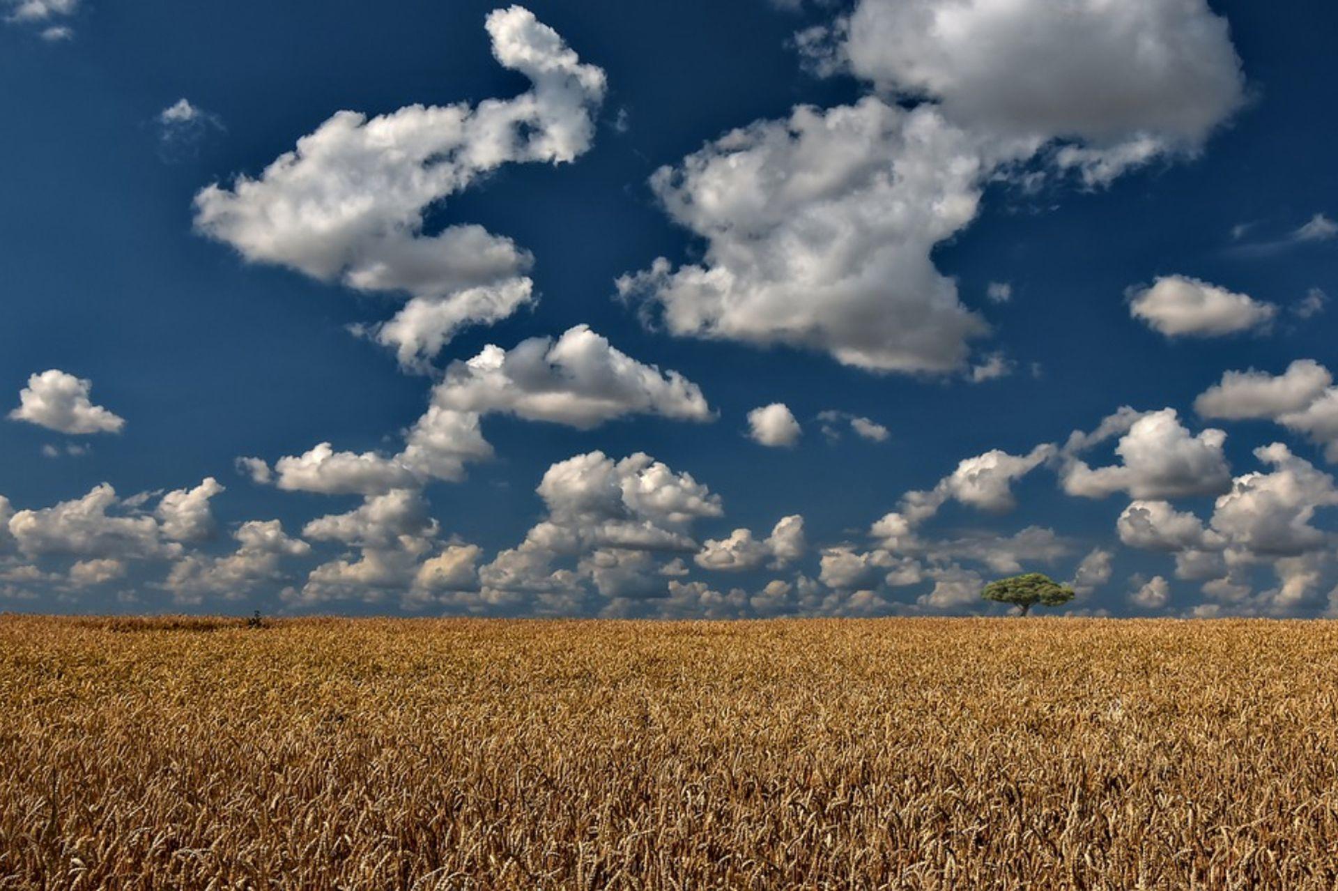 Sandra creció rodeada de campos de trigo, en Salto, provincia de Buenos Aires.