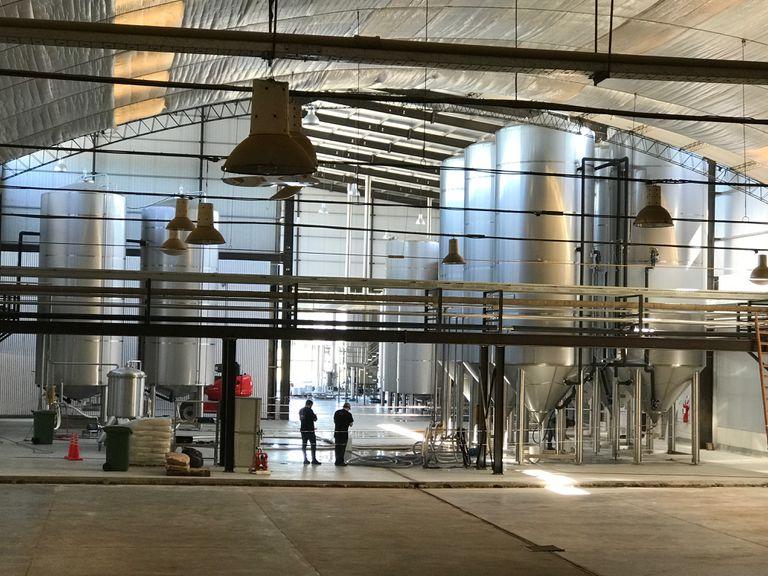 Innovación: la cerveza artesanal que emplea aguar de mar