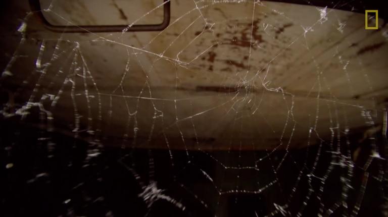 Una telaraña irregular en Chernobyl