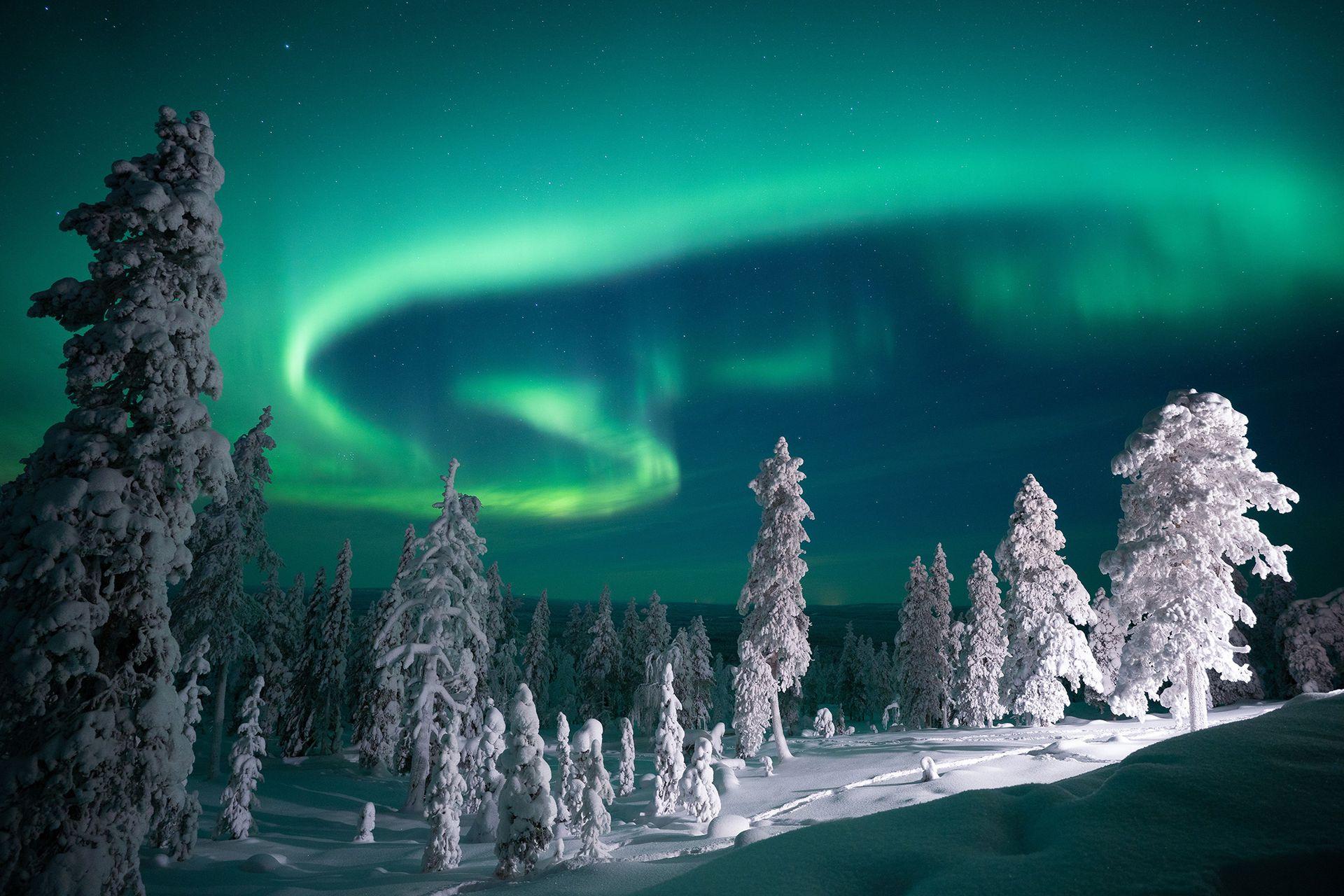 Los bosques nevados, todos blancos, y la luz verdosa de las auroras es la foto más buscada durante el invierno polar.