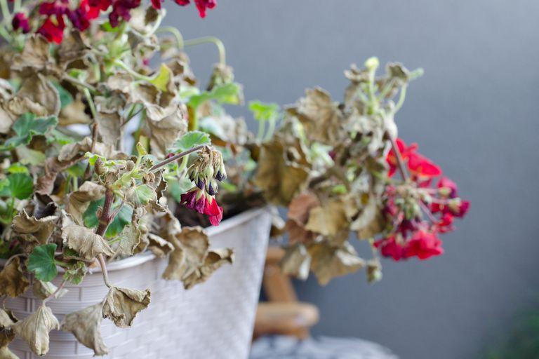 """""""Pusimos plantas en el balcón de casa y mi novia jamás las riega"""""""
