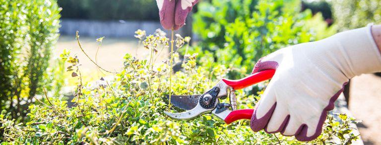Jardinería en casa: armá tu kit ideal de herramientas