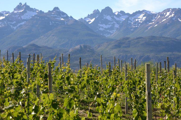 El Pinot Noir, Cabernet y Torrontés son otras cepas que tienen a vinos argentinos como protagonistas