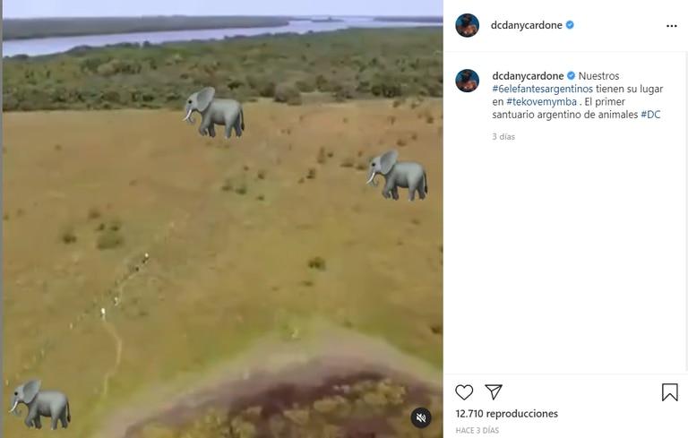 Daniela Cardone busca que todos los elefantes de argentina terminen su vida en el Santuario de Fauna Silvestre de la Fundación Tekove Mymba, en Entre Ríos