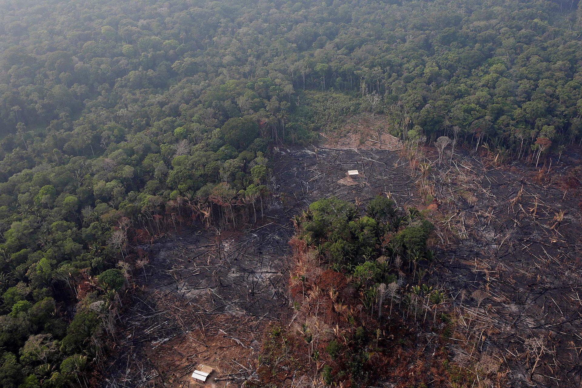 Más de 745.000 hectáreas han desaparecido