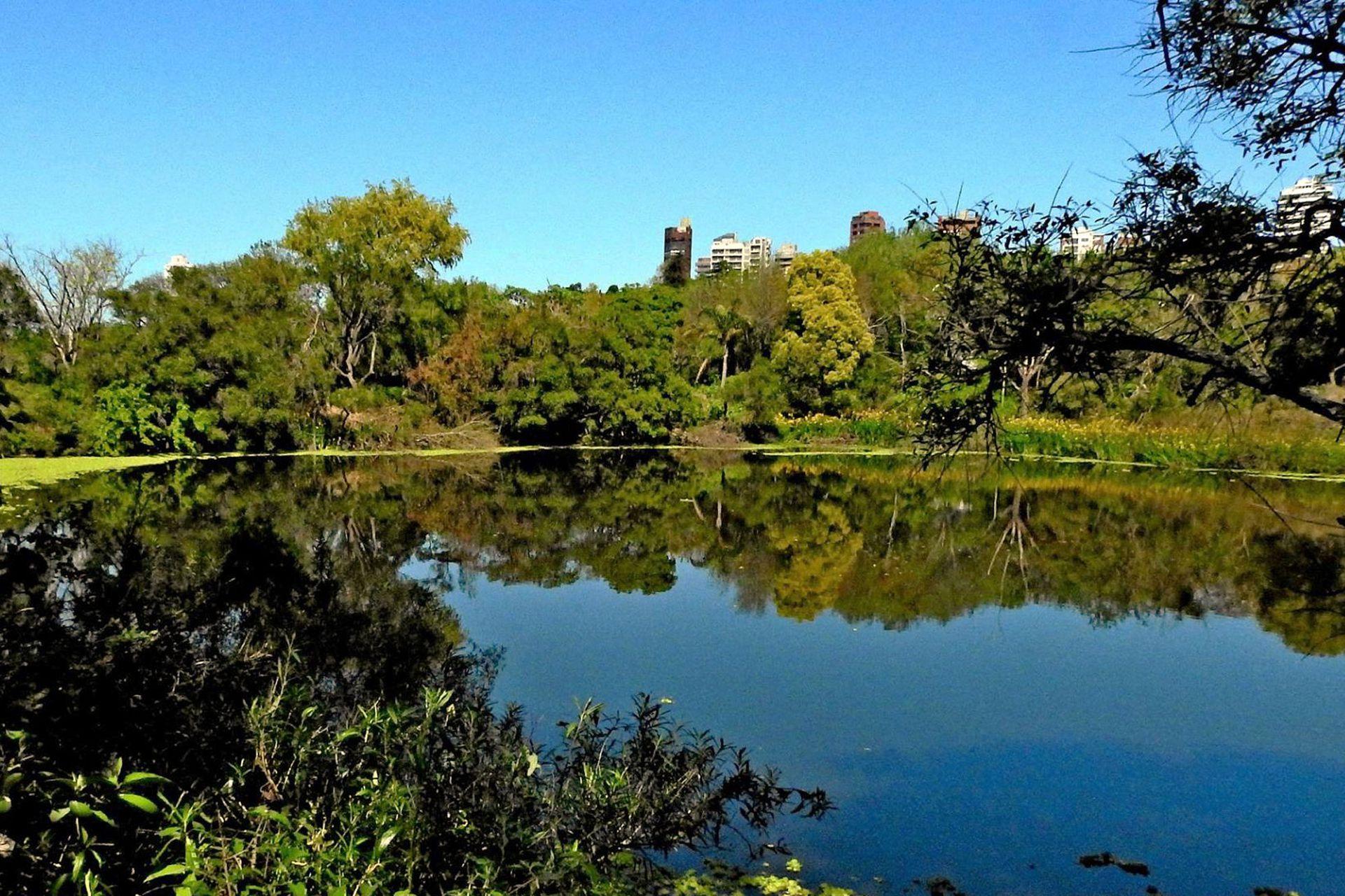 La Reserva Ecológica de Vicente López, a muy pocos minutos del frenesí porteño, es un refugio de silencio y naturaleza nativa.