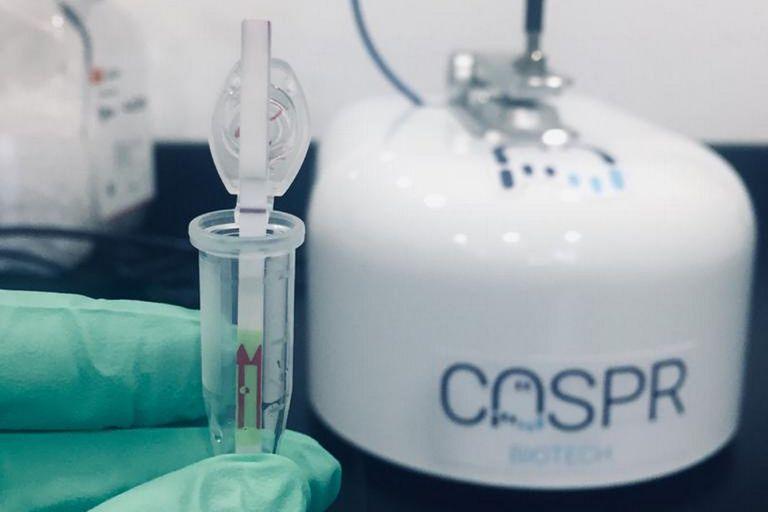 Así es la tecnología del kit creado en la Argentina para detectar el coronavirus