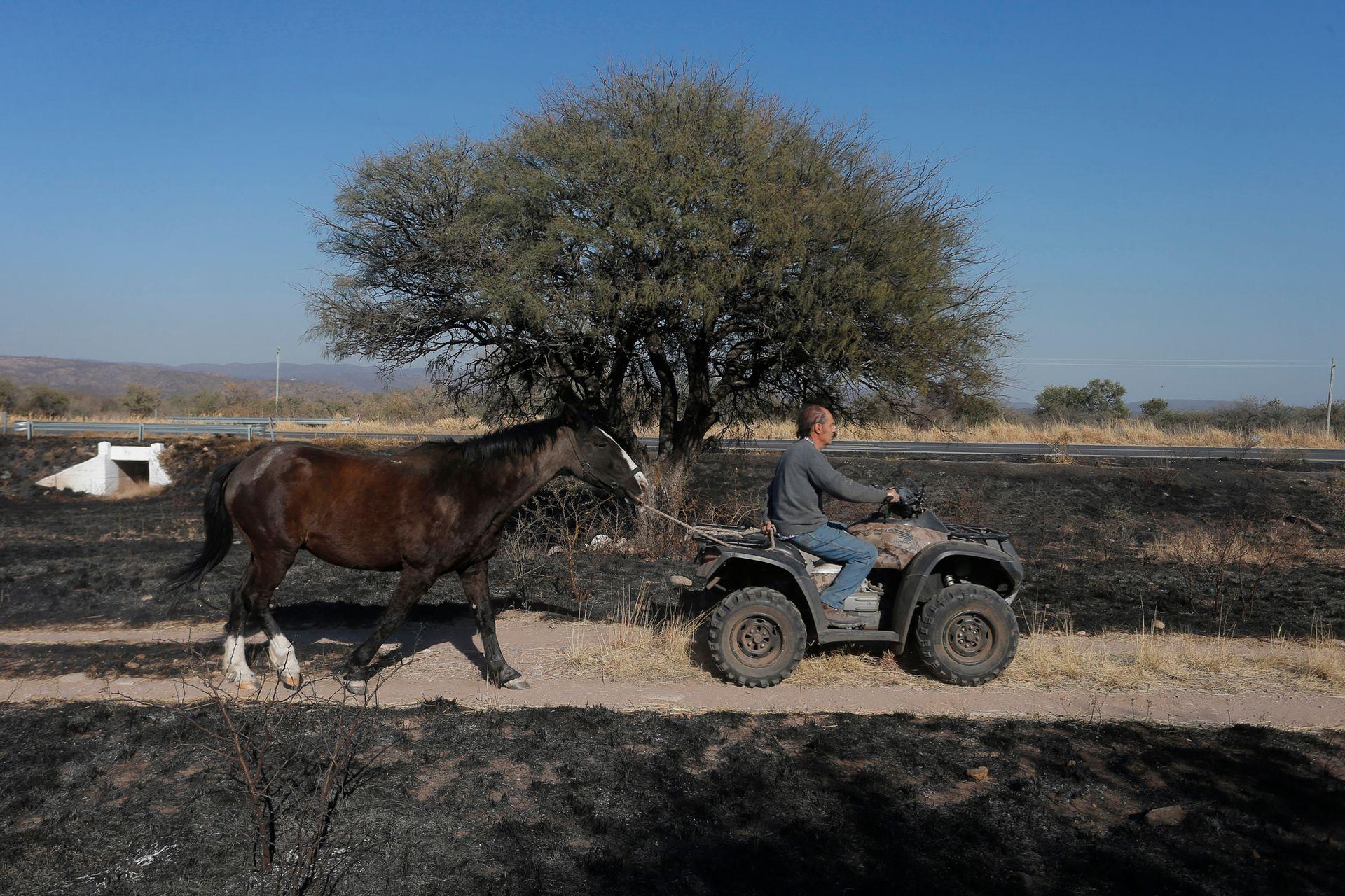 Los habitantes de la zona trasladan a sus animales para evitar que sean alcanzados por el fuego, la fauna de la zona se vio muy afectada por el incendio