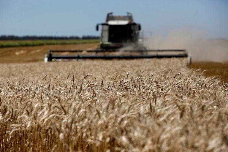 Por grano para el Gran Rosario se volvieron a pagar hasta US$205 por tonelada