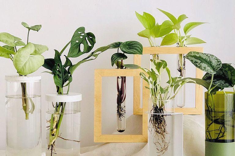 Hidroterrarios, los nuevos objetos de deseo para decorar con plantas