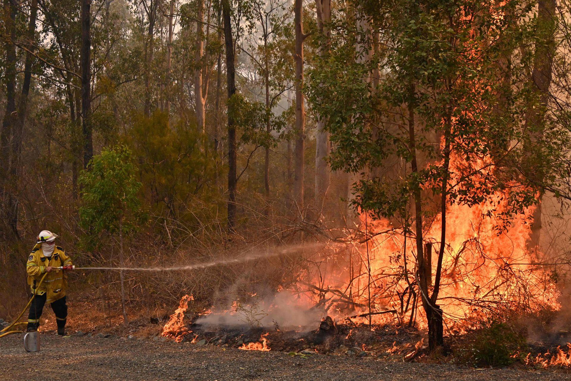 Decenas de incendios asolan el este de Australia, mientras los bomberos luchan con grandes dificultades para extinguir muchos focos al mismo tiempo