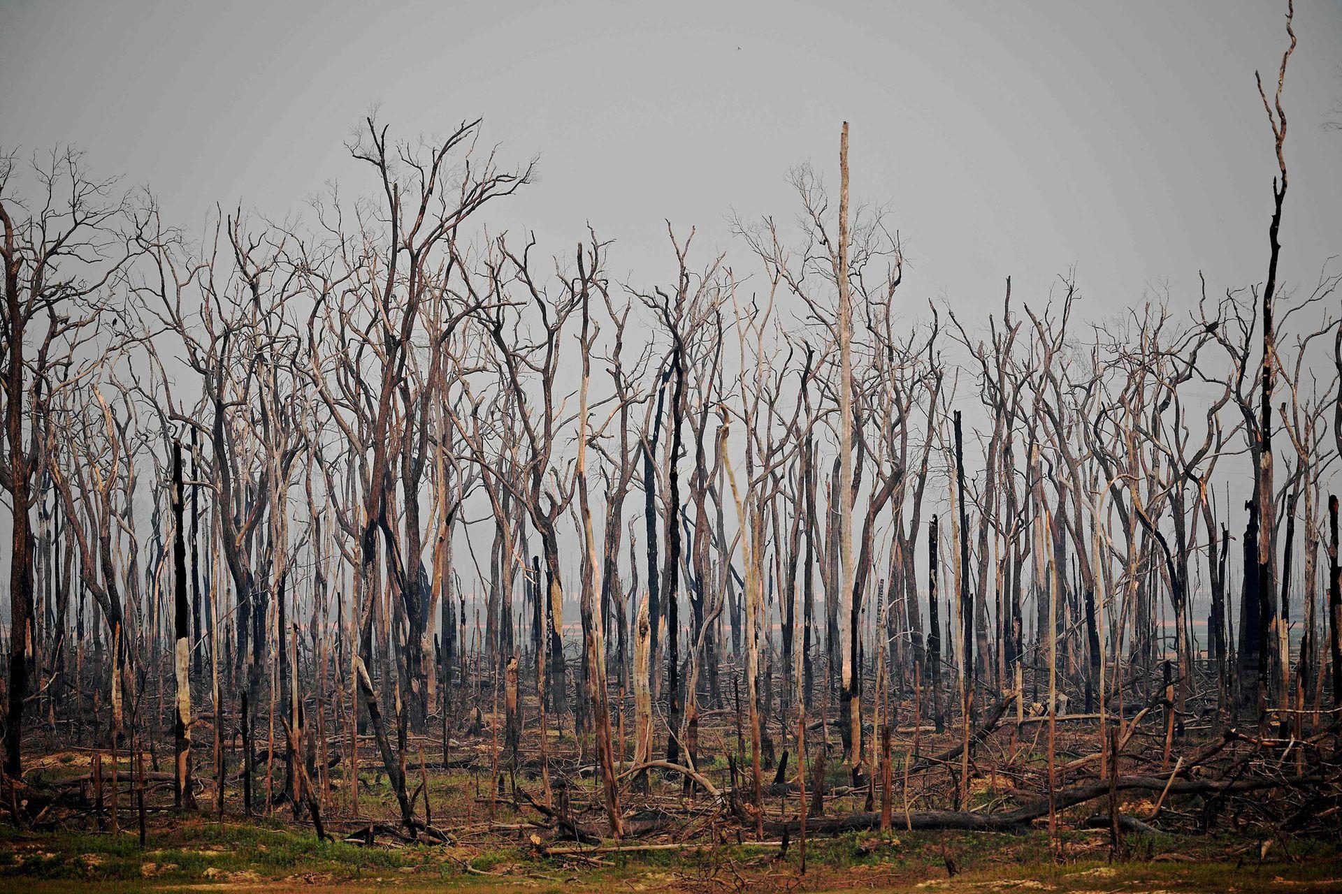 """""""Es muy difícil tener incendios naturales en la Amazonia. Suceden en su mayoría por la mano del hombre"""""""